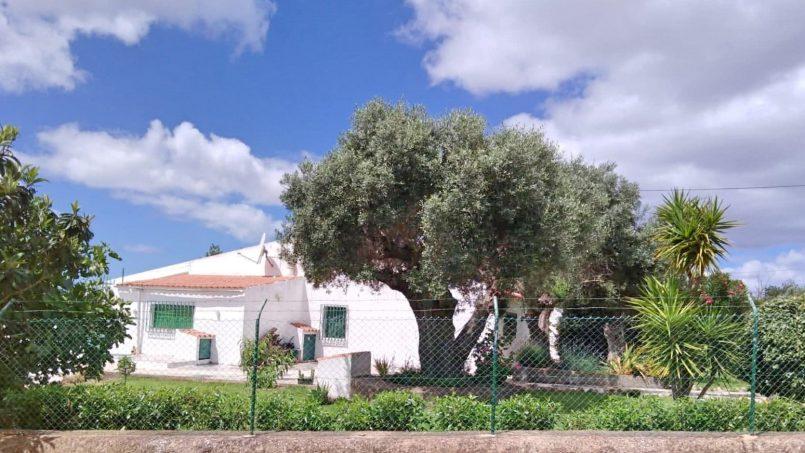 Apartamentos e moradias para alugar, Casa do Vale em Guia, Portugal Algarve, REF_IMG_7269_7270