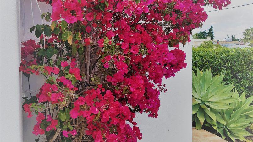 Location appartements et villas de vacance, Magnifique Villa avec piscine à Carvoeiro, Portugal Algarve, REF_IMG_16652_16656